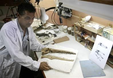 Fossil bird from Peru
